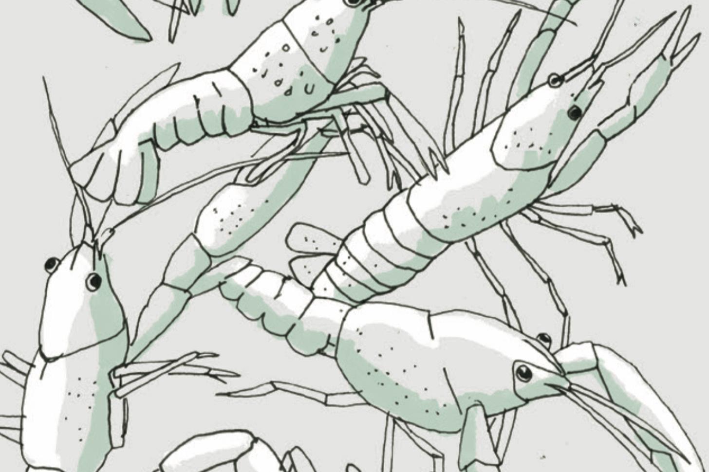 סרטני נהרות משבטים עצמם - טבע - מדע פלוס