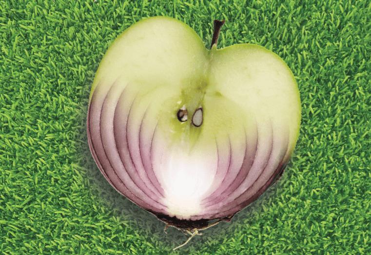 תפוחים ובצלים מאד דומים - טבע - מדע פלוס