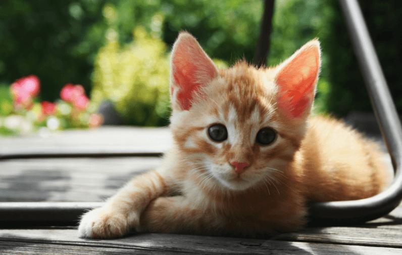 גור-חתולים-חמוד-טבע-מדע-פלוס