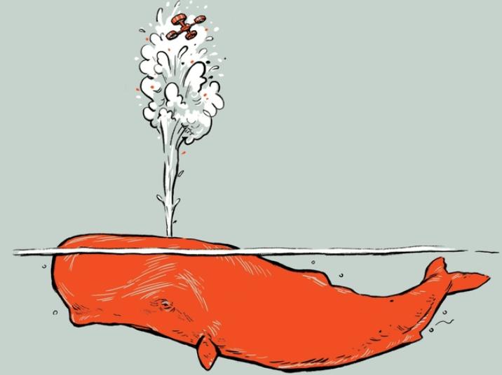 הקשר בין לוויתן לרחפן - טבע - מדע פלוס