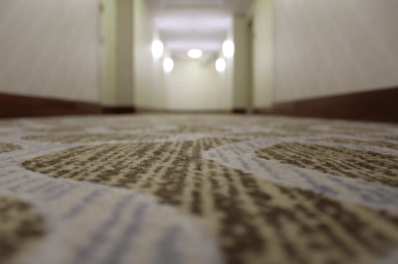 שטיחים מקיר לקיר לא נקיים כמו שהם נראים - מדע - מדע פלוס