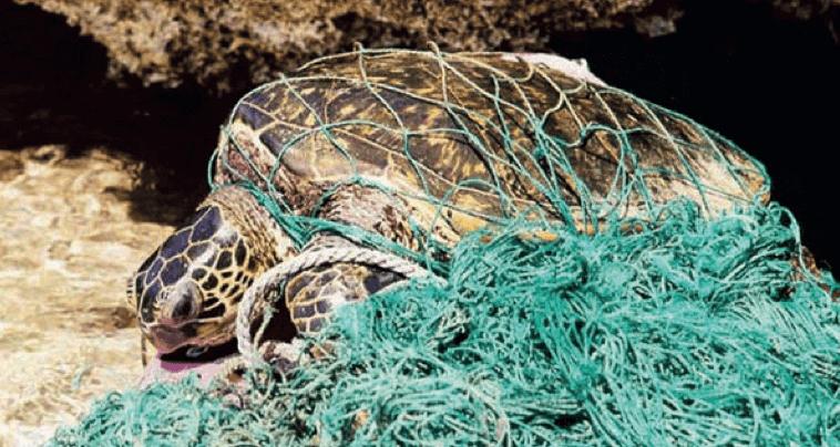 צב ים שנלכד בפסולת ימית - מדע - מדע פלוס