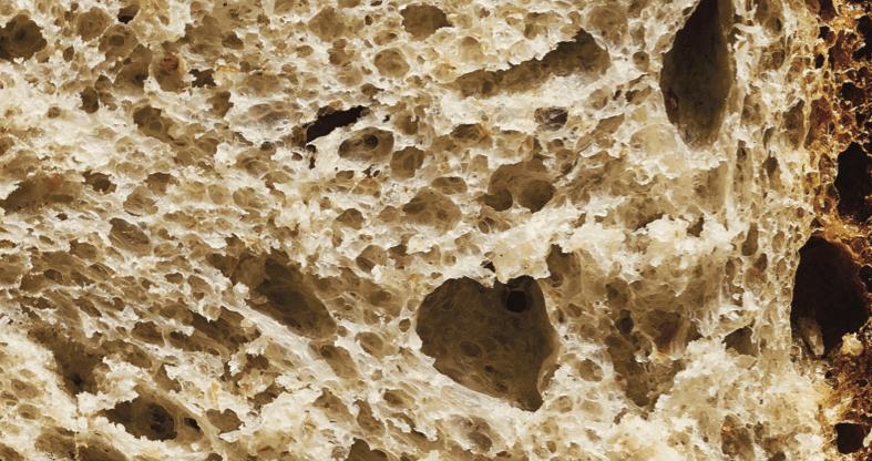 לחם שאור מחמצת - מדע פלוס