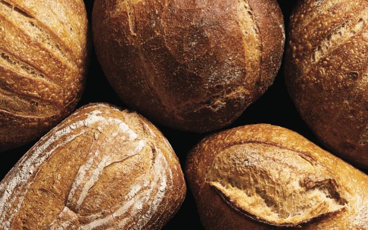 לחם שאור מחמצת - סוד קטן ומלוכלך - מדע - מדע פלוס