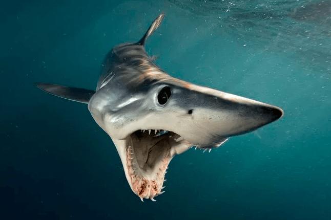 פגישה אישית עם כרישים מופלאים - טבע - מדע פלוס
