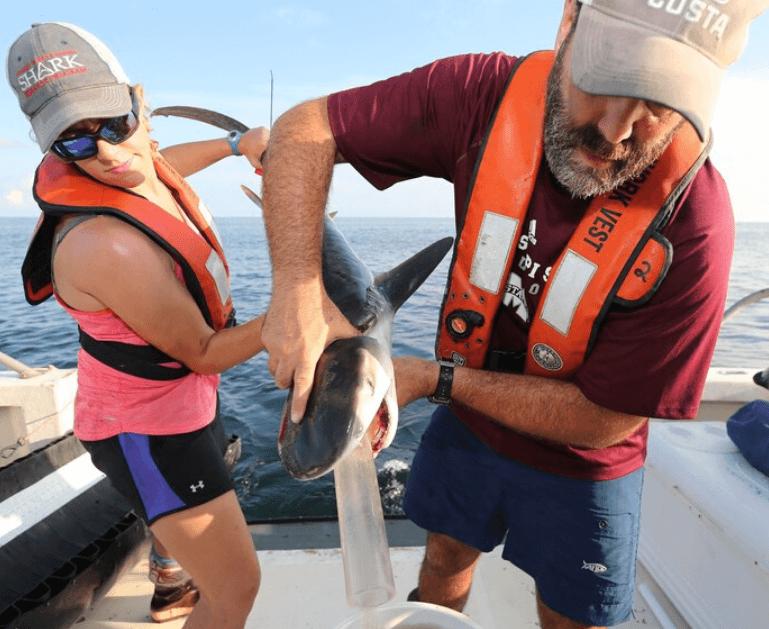 שני מדענים אוספים את תכולת הקיבה של כריש נמר תינוק - טבע - מדע פלוס