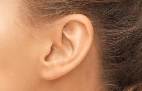 גנים רבים מעורבים בצורת תנוכי האוזניים שלנו
