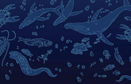 האם החיים באוקיינוס רועשים?
