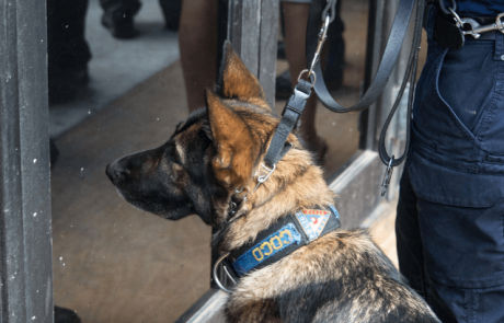טבע בשירות הטכנולוגיה: כלבי גישוש לאיתור סחורות