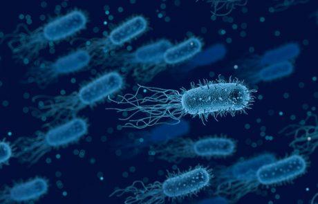 ספות או אסלות? לא תאמינו איפה יש יותר חיידקים!