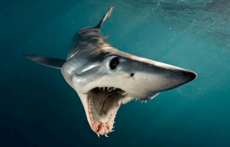 פגישה אישית עם כרישים מופלאים