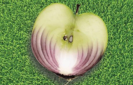 תפוחים ובצלים מאד דומים